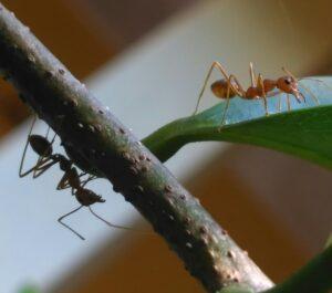 macro photography ants